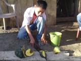 Jason (12) cutting the pumpkin / ayote