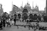 St. Mark's Square, with the basilica and the pigeons - Venice, Italy