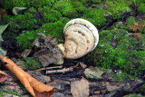 Snail Mushroom, Starved Rock State Park, IL