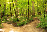 Two roads diverged in a yellow wood, Starved Rock State Park, IL