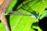 Dragonfly, Starved Rock State Park, IL