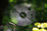 Spider Web design, Starved Rock State Park, IL