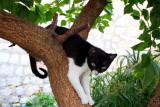 Dubrovnik cats