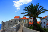 Walls of Dubrovnik Old Town with a palm tree
