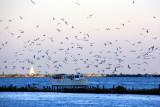 Lake Michigan and the sea gulls, Chicago
