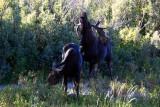 Grand Teton National Park, Wyoming - Moose Junction