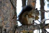 Grand Teton National Park, Wyoming - squirrel