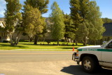 Park Ranger at Mammoth - Yellowstone National Park