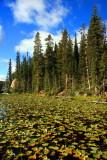 Isa Lake, Great Continental Divide - Yellowstone National Park