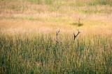 Elk Antlers, Hayden Valley - Yellowstone National Park