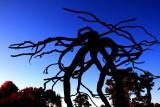Morton Arboretum - Steel Roots