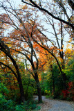 Rock Cut State Park, Illinois - Fall Colors