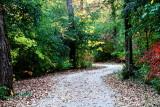 Rock Cut State Park, Illinois - Winding trail