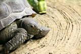 Philadelphia zoo - Tortoise