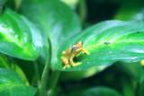 Philadelphia zoo - Frog