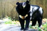 Philadelphia zoo - Bear