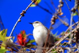 Bird on a branch, La Jolla, California