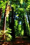 Muir Woods National Monument, California