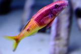 Monterey Bay Aquarium, CA