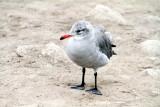 Bird on the Monterey beach, California