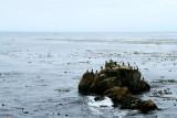 Bird Rock, 17 Mile Drive, Monterey, California