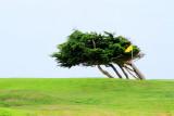 Spyglass hill golf course, 17 Mile Drive, Monterey, California
