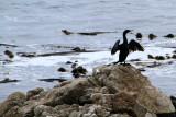 Bird lookout, 17 Mile Drive, Monterey, California