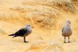 Birds, 17 Mile Drive, Monterey, California