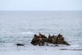 Seals, 17 Mile Drive, Monterey, California
