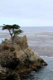 Lone Cypress, 17 Mile Drive, Monterey, California