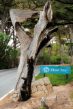 Ghost Tree, 17 Mile Drive, Monterey, California