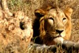 National Zoological Park, Delhi