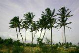 Blowing in the wind, Dharapuram, Tamil Nadu