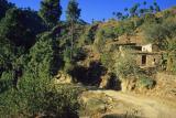 Road through village