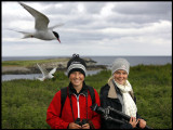 Martin & Madelene on Farne Islands (England) in a Common Tern colony