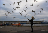 Late feeding of gulls with chips in Seahouses (England)