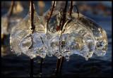 Icebells - Huseby
