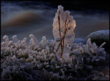 Icefoot with small frozen branches - Huseby
