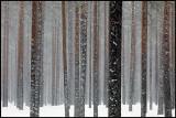 Short after snowfall - Liminka Finland