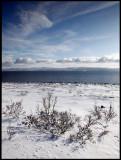 Varanger coastline after snowfall