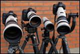 The Big Guns 2009 Eos-1Ds MK3 & 600/4L IS +  50D & 300/2,8L IS + 400/5,6 L + Eos-1D Mk3 & 500/4L IS