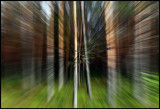 Zooming in to finnish pine forest......