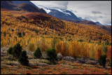 Autum colors near Galdhöpiggen - Norway