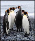 King Penguins - time for inspection?