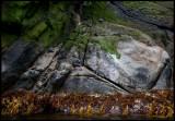 New Zealand Furseals at Bounty Islands