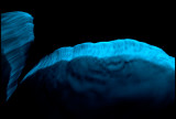 Sea Sparkle (Noctiluca scintillans) at night seen from the boat