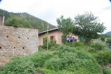 Volunteer house with surrounding weeds