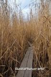 Marsh-10.jpg