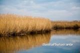 Marsh-12.jpg