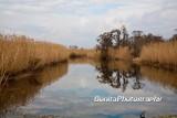Marsh-18.jpg
